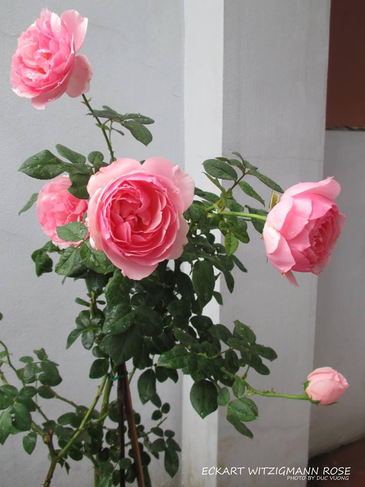 chi em hoc hoi cach trong hong vao chau cho day hoa - 5