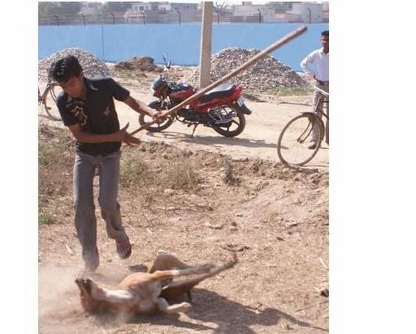 lao dong vn bi bat o dai loan vi chup hinh hanh ha cho - 1