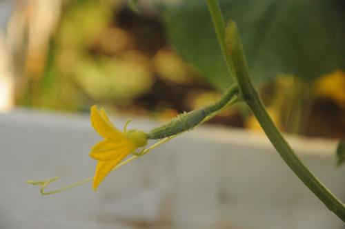 bac si ung buou chia se cach trong rau sach tai nha (phan 2) - 4