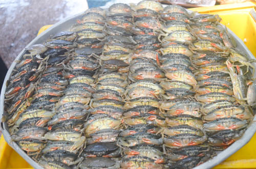nguòi dan sài gòn táp nạp mua sam dip tet duong lich 2016 - 14