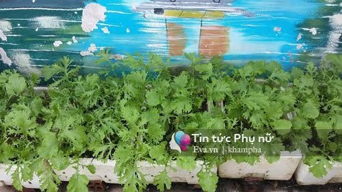 Vườn rau sạch hoa trái lúc lỉu từ xơ dừa của 8x Sài thành-7