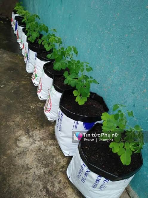 Vườn rau sạch hoa trái lúc lỉu từ xơ dừa của 8x Sài thành-10
