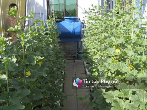 Vườn rau sạch hoa trái lúc lỉu từ xơ dừa của 8x Sài thành-11