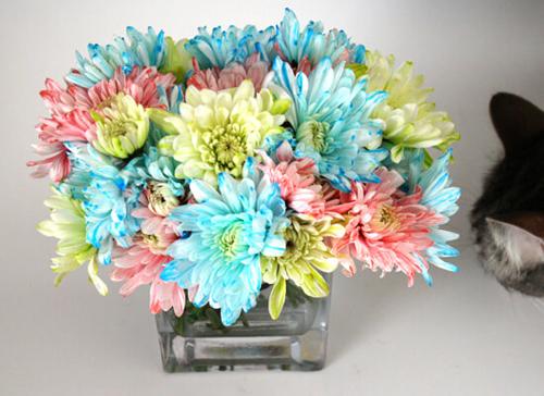 Bí quyết nhuộm màu cho hoa cúc trắng cực nhanh - 12