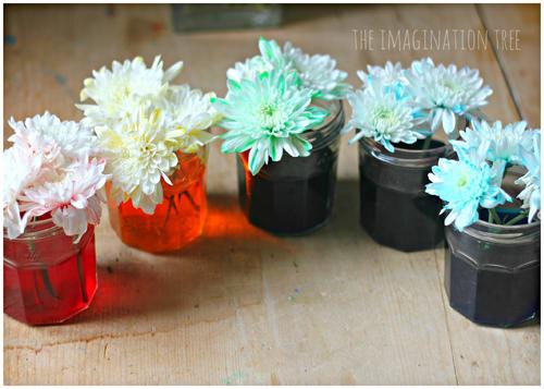 Bí quyết nhuộm màu cho hoa cúc trắng cực nhanh - 13