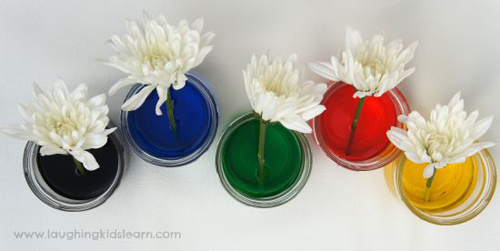 Bí quyết nhuộm màu cho hoa cúc trắng cực nhanh - 11