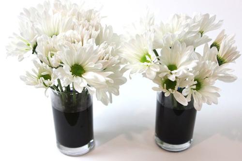 Bí quyết nhuộm màu cho hoa cúc trắng cực nhanh - 6