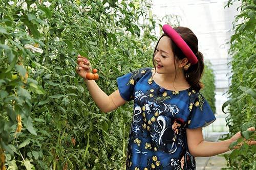 Lan Phương trồng rau, nhảy múa cùng người dân Nhật Bản-3
