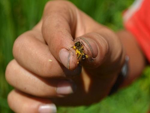 co giáo nguy kich vi bị ong vò vẽ dót hon 70 mũi khi dang chay xe may tren duong - 1