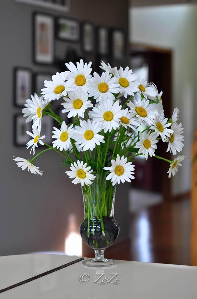 muon binh cuc hoa mi dep ma tuoi lau, chi em nen biet nhung bi kip sieu don gian nay - 2