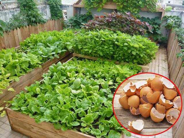 Không cần phân bón, rau vẫn lên xanh tốt chỉ nhờ... rác thải nhà bếp