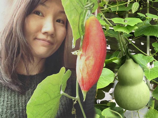 Ban công chỉ 5m², mẹ Hà Nội vẫn trồng được cả vườn sai trĩu rau củ tí hon độc lạ