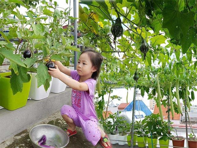 Vườn rau quả sai lúc lỉu vạn người mê trên sân thượng của mẹ Việt đất Cảng