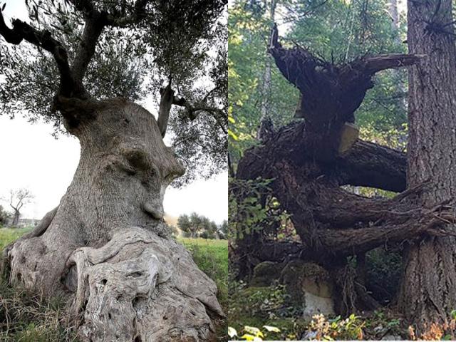 Cận cảnh những cây cổ thụ hình thù kỳ quái khiến ai xem cũng giật mình thon thót
