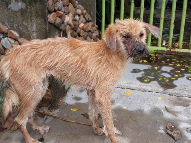 Chú chó bị bệnh nặng chọn cái chết xa nhà và hành động đáng khen của chàng trai tốt bụng