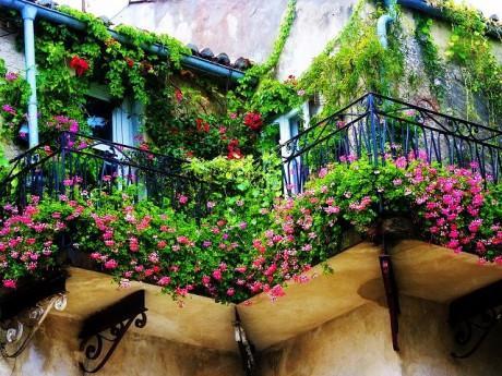 """7 loại hoa trồng ban công mùa thu - đông đẹp miễn chê cho nhà bạn """"nổi nhất phố"""""""