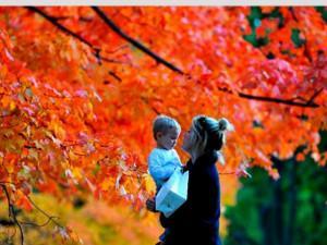"""Mê mẩn ngắm những mùa cây thay lá """"long lanh"""" nhất thế giới"""