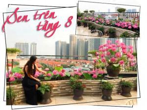 Chuyển hàng tấn đất làm ao sen, trồng hồng trên sân thượng, mẹ HN xây thiên đường phủ kín hoa