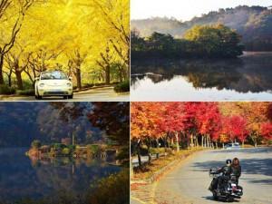 """Đây mới thực sự là 3 địa điểm """"chất"""" nhất năm nay để ngắm mùa lá vàng Hàn Quốc!"""