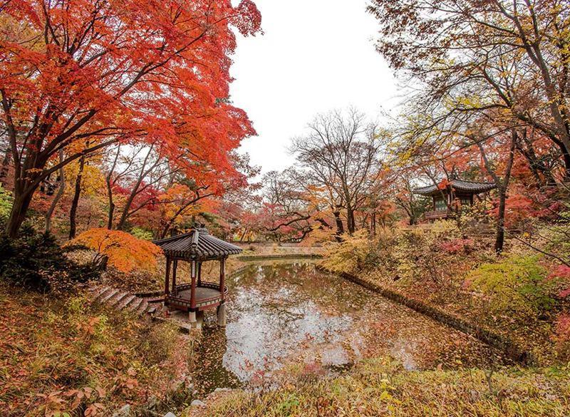 Không những vậy, sự cân bằng đáng kinh ngạc của kiến trúc và thiên nhiên này vào mùa thu, khi những chiếc lá cây phong trổ màu rực rỡ tạo nên khu vườn cung điện đẹp như phim cổ trang.