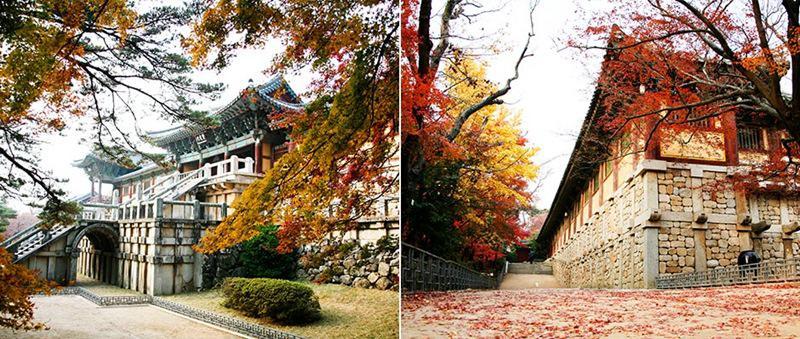 3. Sắc màu ảo diệu ở Đền Bulguksa  Chỉ cần đến phía Đông của cố đô Gyeongju của Hàn Quốc, nơi được mệnh danh là 'thành phố của bức tường', bạn sẽ thấy những kiến trúc lịch sử trong đó có đền Bulguska.