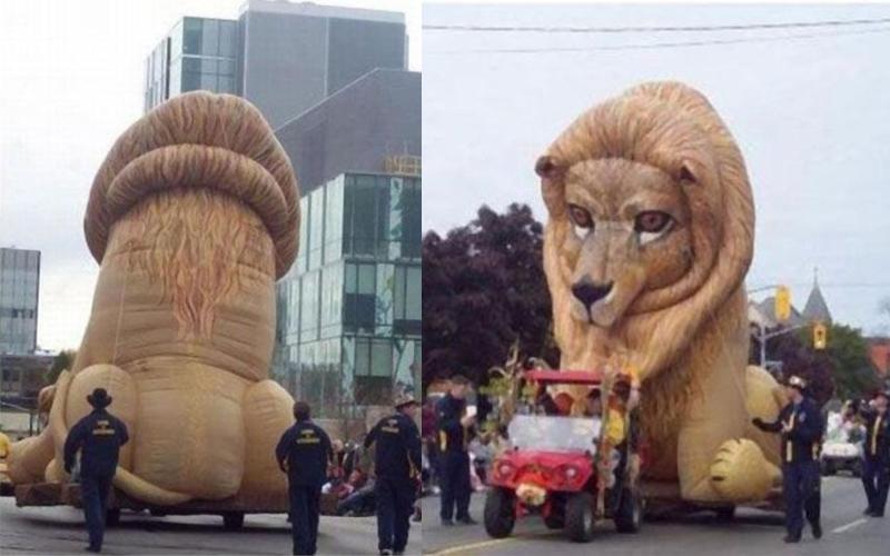 Bạn đã tưởng tượng đến điều gì khi nhìn bức ảnh bên trái? Đây chỉ là một chú sư tử thôi đấy nhé!
