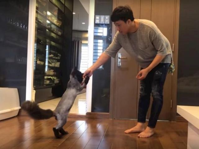 Mua con mèo hết 3.000 USD, Trấn Thành kỳ công huấn luyện thế này đây