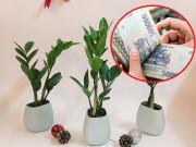 Tiền ngập két 3 tháng cuối năm chỉ nhờ chọn đúng loại cây phong thủy trong nhà