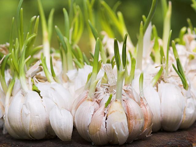 6 thực phẩm mọc mầm không hề độc mà là thần dược ngừa cả ung thư nhiều người bỏ phí