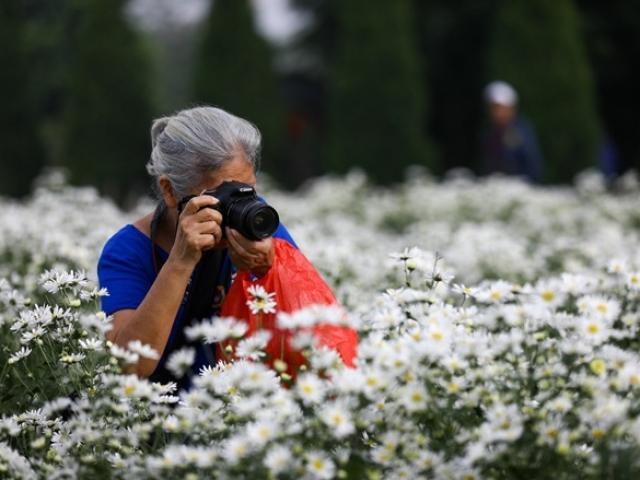 Cúc hoạ mi Hà Nội vào mùa: Đâu chỉ giới trẻ, ông bà già cũng kéo nhau đi chụp ảnh