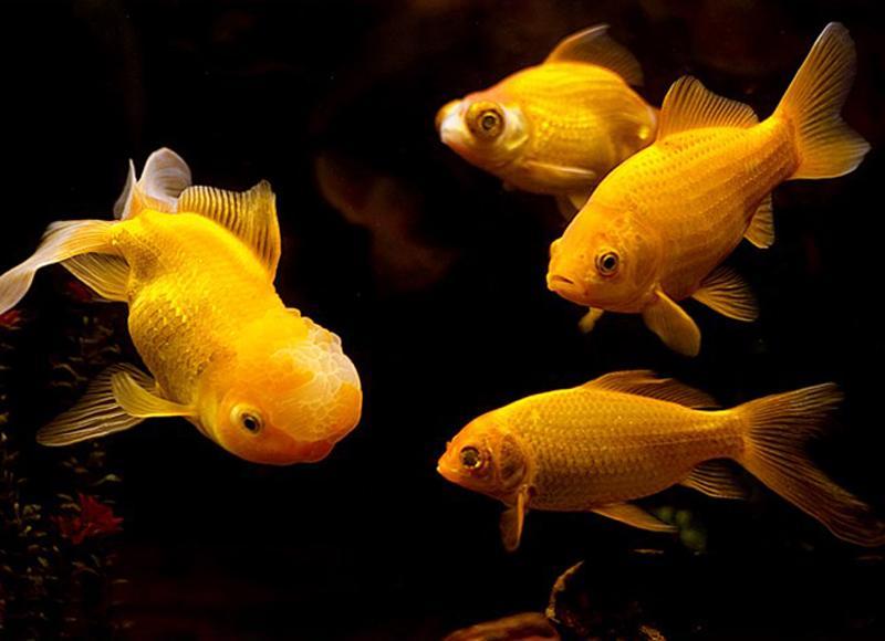 Nếu trong giấc mơ, bạn thấy một bầy cá đang tung tăng bơi lội, giấc mơ đóchính là điềm báocho tài lộc. Bầy cá đến cũng nhưtiền bạc ào àochảy vào nhà.