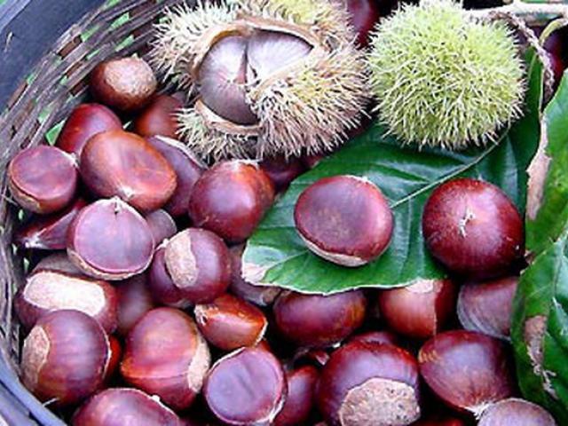 Loại hạt được coi là quả nhân sâm có tác dụng ngừa ung thư, rất phổ biến vào mùa đông