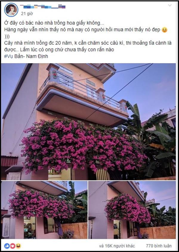 Xuất hiện giàn hoa giấy 20 năm tuổi đẹp nức lòng hội chị em ở Nam Định quê mình