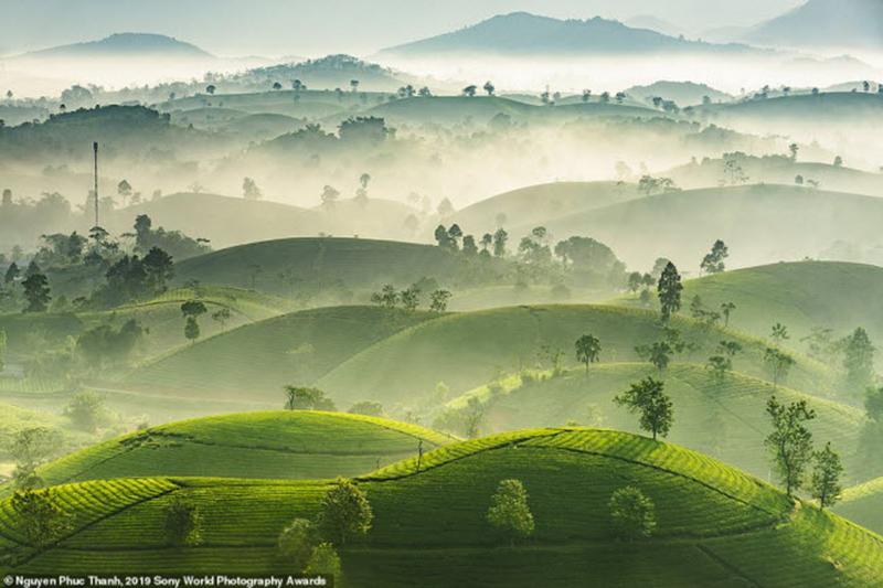 Nắng sớm đầu đông xuyên qua màn sương bao phủ những đồi chè xanh mướt ở Long Cốc, tỉnh Phú Thọ, Việt Nam. Ảnh: Nguyen Phuc Thanh