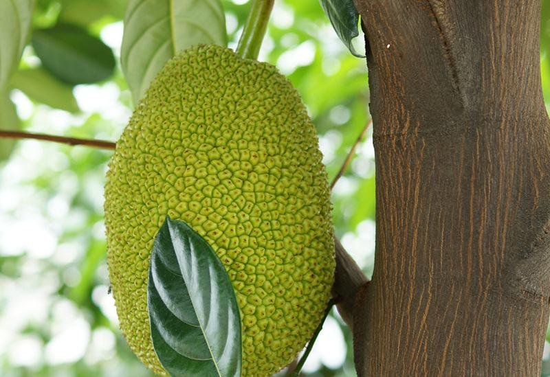Nhiều người cho rằng, mùa nào thì cúng loại trái cây đó, hoặc mình thích ăn gì mua về thì cúng cái đó, chỉ cần thành tâm là được. Điều này cũng không hoàn toàn sai. Tuy nhiên, cần phải tránh những loại quả có gai nhọn.