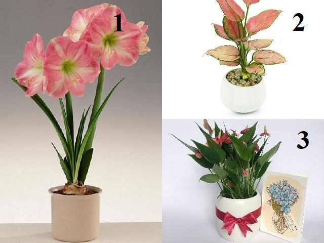 4 loại hoa siêu đẹp chỉ cần nước là sống, đặt ở đâu tiền chảy ào về chỗ đó