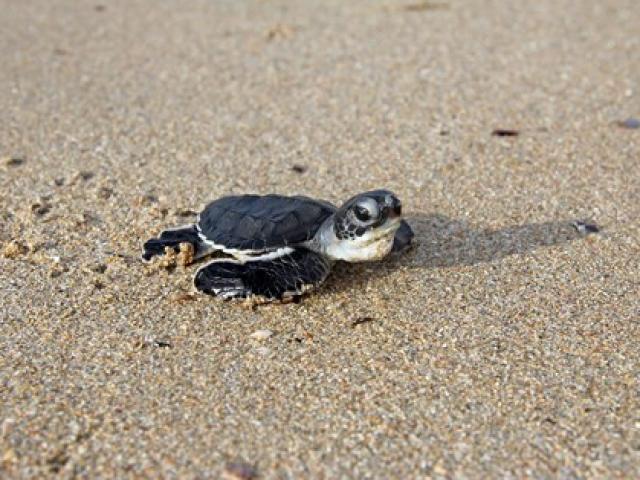 Sốc độc lạ: Lạ kỳ chuyện rùa tự chuyển đổi giới tính tự nhiên