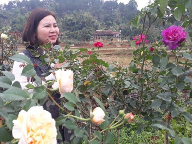 Mê mẩn vườn hoa hồng đẹp như tranh, trị giá tiền tỷ của mẹ Sơn La